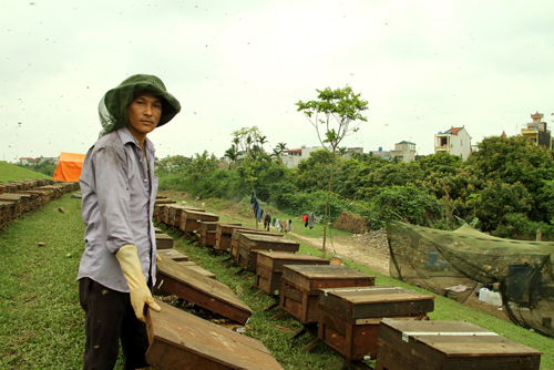 Nghề nuôi ong tại Hưng Yên