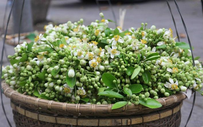 Cách sử dụng hoa bưởi của người Hà Nội