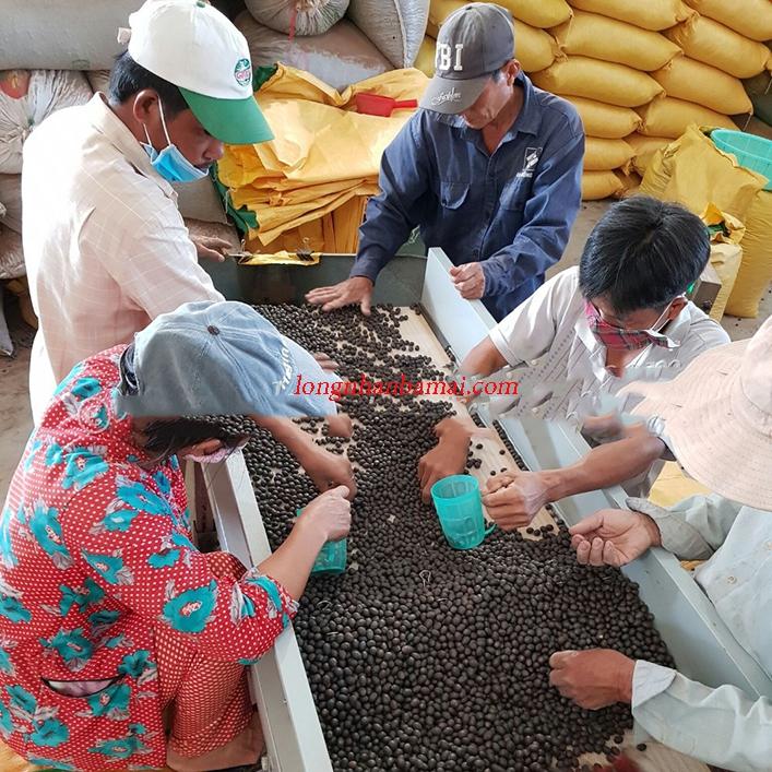 Sơ chế hạt sen tại cơ sở chế biến nông sản Tuấn Loan