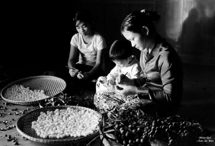 Giới thiệu làng nghê làm long nhãn ở Hưng Yên