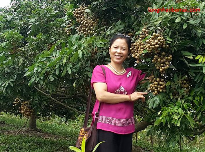 Mời bạn ghé thăm vườn nhãn Hưng Yên