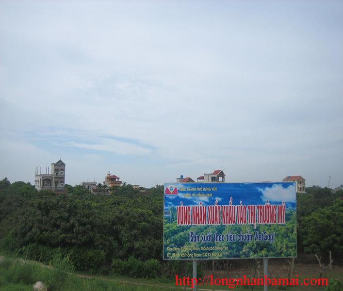 Bán nhãn lồng Hưng Yên chất lượng cao tại Hà Nội-5
