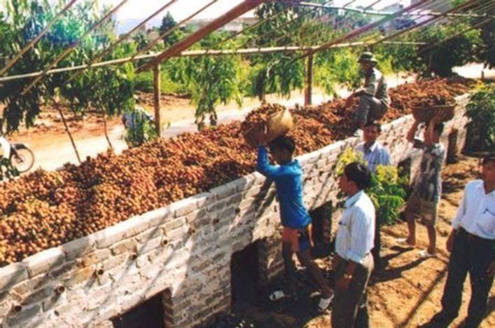 Lò sấy vải tại Bắc Giang